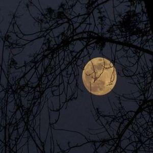 Caminhando em noite de Lua Cheia