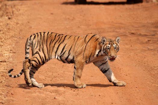 Tadoba Jungle safari (Guaranteed Departure), 22 April | Event in Kamthi | AllEvents.in