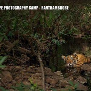 Exclusive Wildlife Photography Camp - Ranthambhore Nov 2019