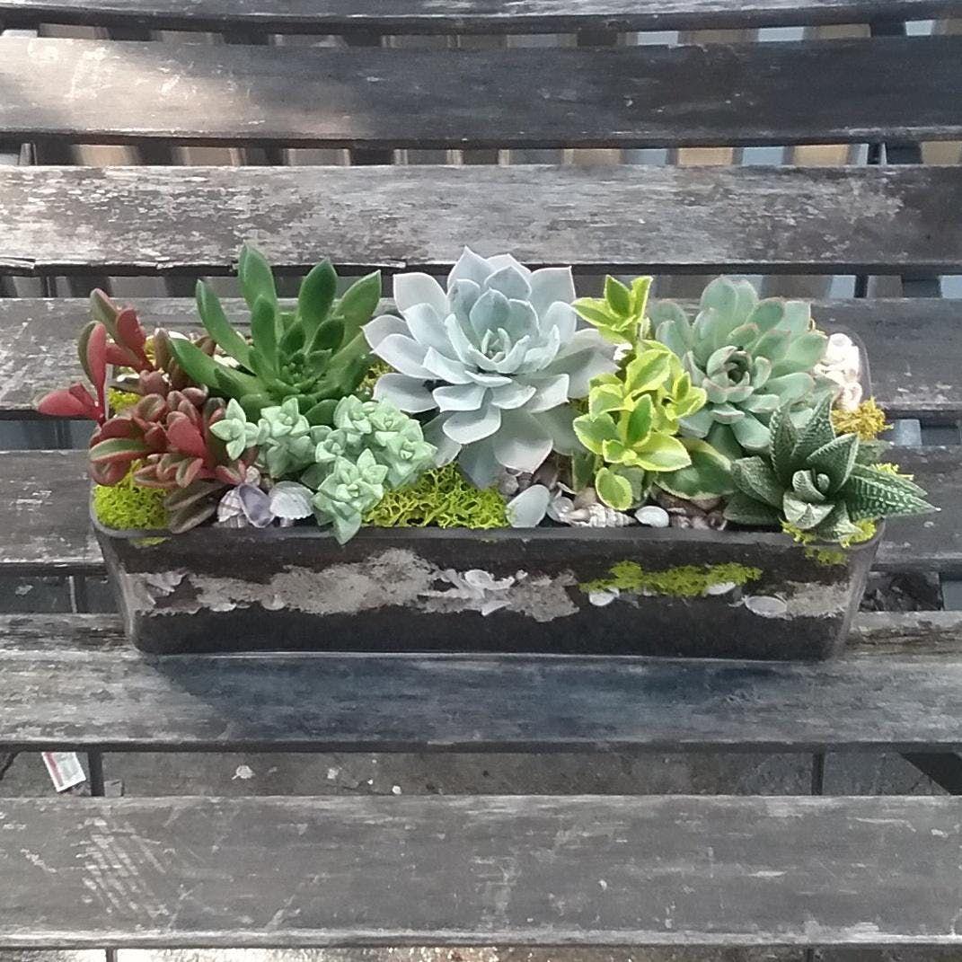 Diy Succulent Garden Design Workshop