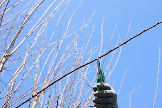 Winter Fruit Tree Pruning (FULL)