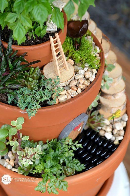 Fairy Gardens & Succulents