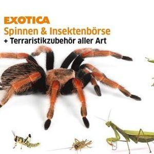 Exotica Spinnen- Insekten- und Wirbellosenbrse
