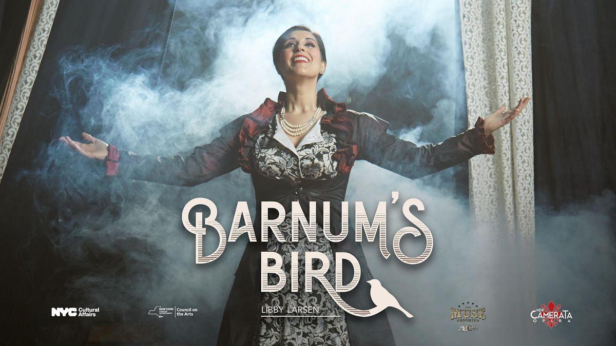 Barnums Bird (Night 1)