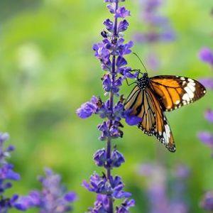Butterfly Gardening Workshop