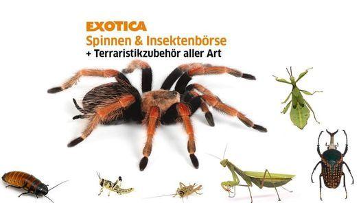 Exotica Spinnen-, Insekten- und Wirbellosenbörse, 17 April | Event in Langenzersdorf | AllEvents.in