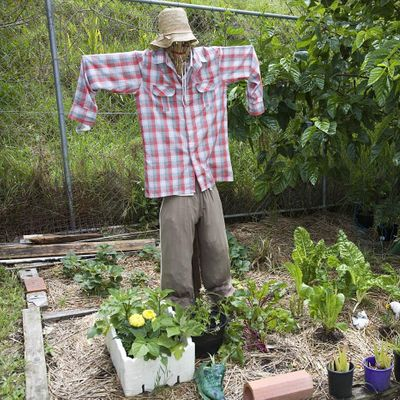 Productive Organic Gardening Online Workshop - 11 September 2021