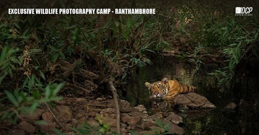 Exclusive Wildlife Photography Camp - Ranthambhore Nov 2019