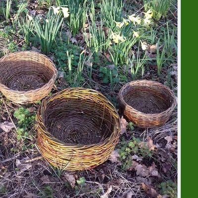 Basket Willow Weaving Workshop