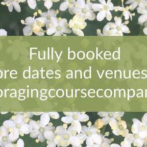 Birmingham Spring Foraging Course