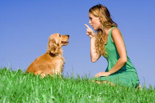 Hundetrainer Ausbildung Fachrichtung Erziehung 2020 Essen
