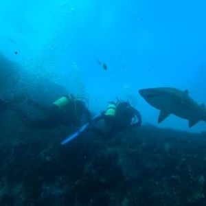 Double Dive North Stradbroke Island 1st November 2020