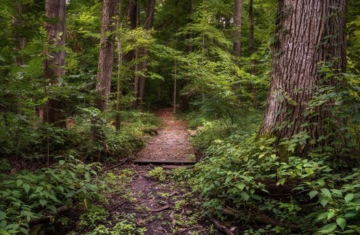 National Take a Hike Day: Fogwell Forest, 17 November | Event in Fort Wayne | AllEvents.in