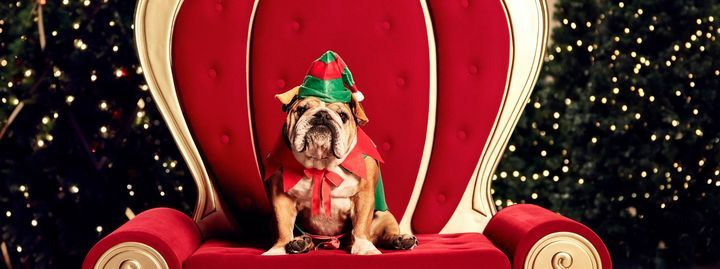 Pet photography: Santa photos with the whole family | Event in Fairlight | AllEvents.in