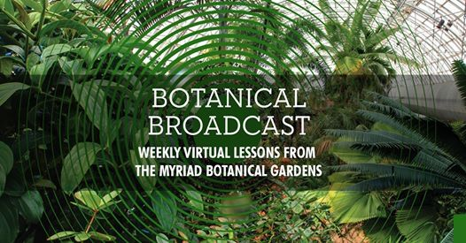 Garden In Place Weekly Virtual Lessons In Nature For Children At