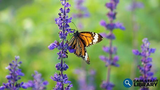 Butterfly Gardening Workshop, 23 June | Event in Carlstadt | AllEvents.in
