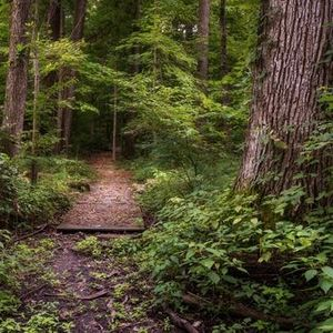 National Take a Hike Day Fogwell Forest
