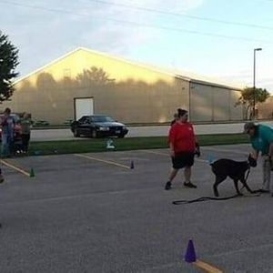 Basic Group Obedience Class 6 weeks
