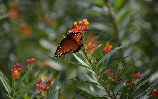 Plant a Butterfly Garden, 6 October | Event in San Antonio | AllEvents.in