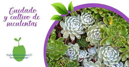 Curso Cuidado y Cultivo de Suculentas Online, 27 March | Online Event | AllEvents.in