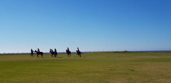 THE 101-POLO-WEEK - ACADEMY SPAIN | Event in Cadiz | AllEvents.in