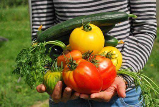 Kitchen Garden Workshops, 22 August   Event in Adelaide   AllEvents.in