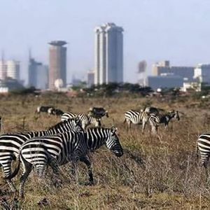 NAIROBI NATIONAL PARK GAME DRIVE VISIT TO GIRAFFE CENTRE & BOMAS