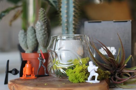 SOLD OUT Star Wars Terrarium Workshop with the Urban Botanist