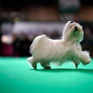 RDA Rossington Hall Annual Dog Show