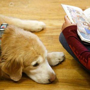 Barking Book Buddies Read to a Dog