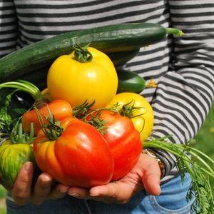 Kitchen Garden Workshops