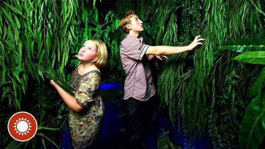 Geheimnisvoller Regenwald