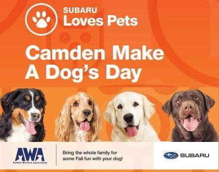 Camden Make A Dog's Day   Event in Camden   AllEvents.in