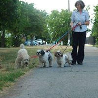 Carol the Dog Walker