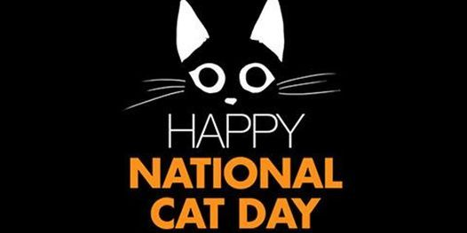National Cat Day Storytime On Allevents In Online Events