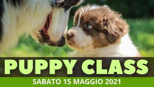Puppy Class - Socializzazione Cuccioli, 15 May   Event in Livorno   AllEvents.in
