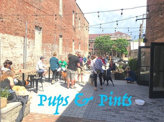 Pups & Pints at Pour Bros  Craft Taproom Champaign, Champaign