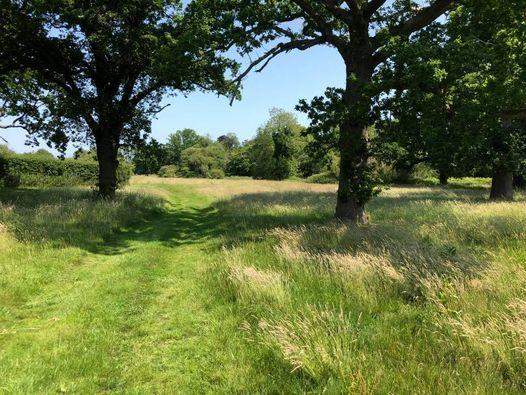 Norfolk, Hunstanton, Foraging Course Walk, 5 June   Event in Hunstanton   AllEvents.in