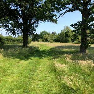 Norfolk Hunstanton Foraging Course Walk