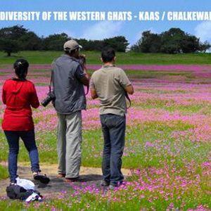 Biodiversity of Western Ghats - Kaas  Chalkewadi Sept 2020