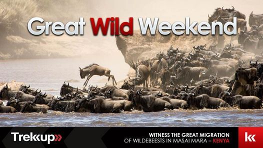 The Great Wild Weekend   Great Migration, Kenya   Event in Dubai   AllEvents.in