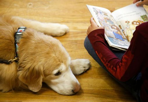 Barking Book Buddies: Read to a Dog!, 25 September   Event in Northville   AllEvents.in