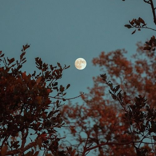 FULL MOON WALK, 20 October   Event in Richmond   AllEvents.in