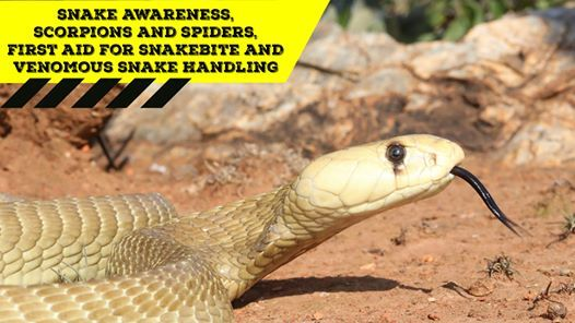 Snake Awareness First aid for Snakebite Venomous Snake Handling