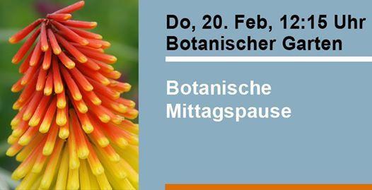 botanischer garten ulm