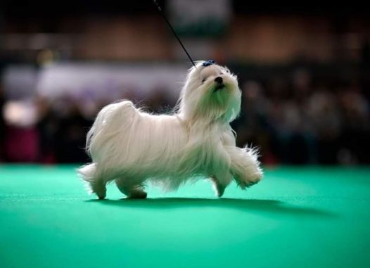 RDA Rossington Hall Annual Dog Show, 20 June   Event in Doncaster   AllEvents.in