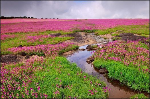 Kaas Plateau - The Valley of Flowers, 18 August | Event in Mumbai | AllEvents.in