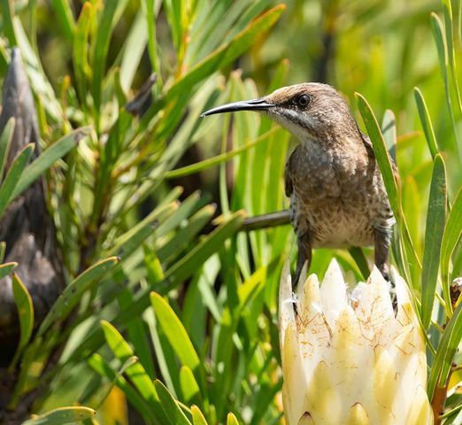 Guided Bird Walk - Bookings Essential, 10 March | Event in Somerset West | AllEvents.in