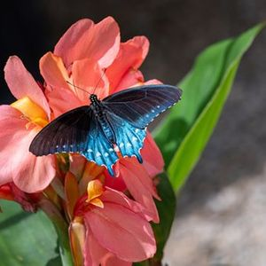 Facebook Live A Look at Butterflies & Blooms