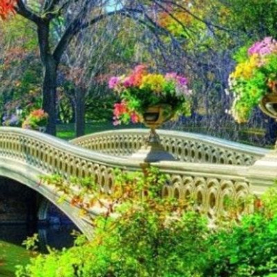 Paint In Central Park